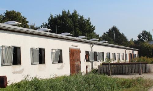 In ihren Boxen haben die Pferde Fenster, durch die sie nach draußen gucken können.