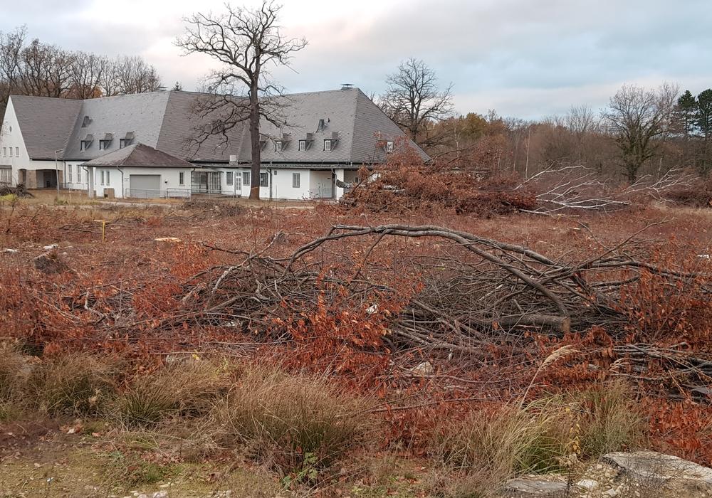 Der Arbeitskreis Fliegerhorst fordert mehr Bäume.