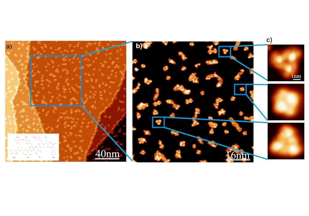 Eines der Bilder die vielleicht bald eine künstliche Intelligenz auswertet: Das Rastersondenmikroskop STM zeigt die Anordnungen von Peptidhormonen auf einer kristallinen Kupferoberfläche.