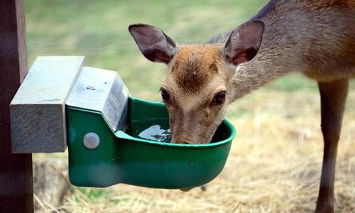 Auch Tierpfleger ist ein mögliches Betätigungsfeld für das FÖJ.