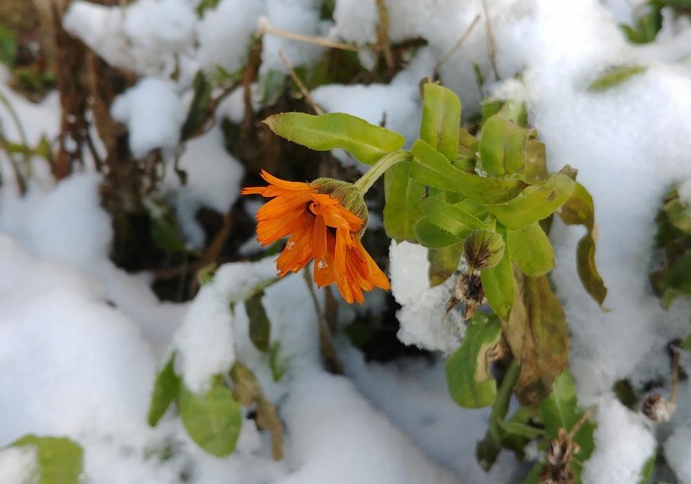Hier passt etwas nicht: Blütenpracht im Winter?