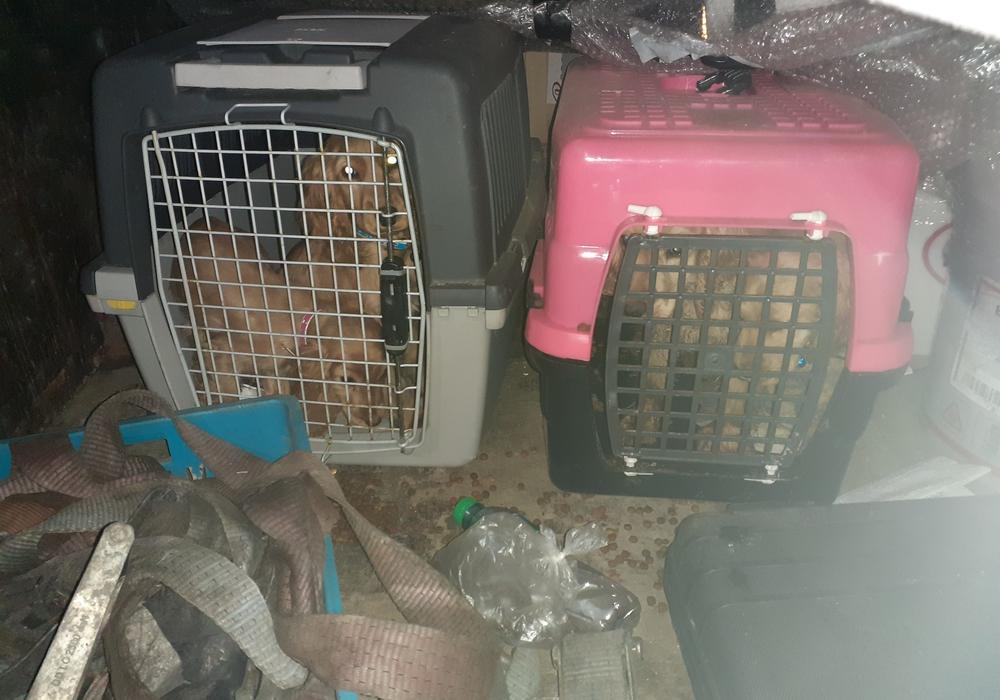 Der Zoll fand vier Hundewelpen in viel zu kleinen Transportboxen.