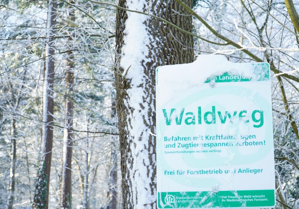 Verschneites Waldeingangsschild. Försterinnen und Förster der Landesforsten bitten um Rücksichtnahme beim Waldbesuch.