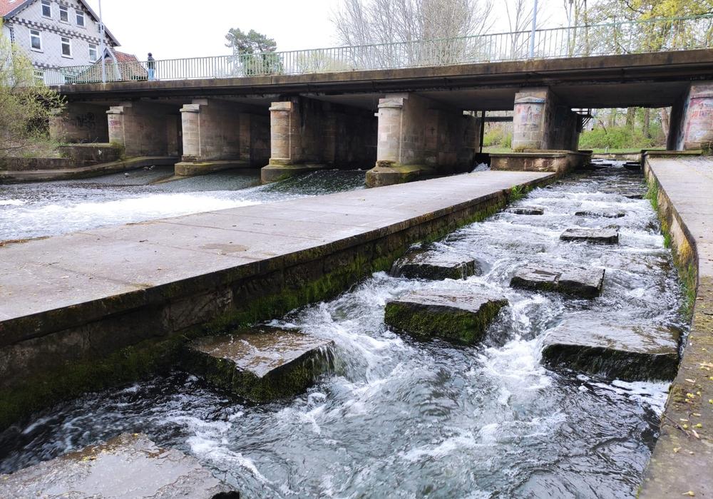 Das Juliuswehr mit Fischpass. Untersuchungen zufolge die beste Option für ein Wasserkraftwerk - wenn auch nur zu Forschungszwecken.