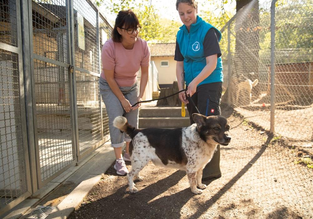 Das Tier und sein Wohl stehen im Tierheim im Vordergrund – und bei der Vermittlung wird ganz genau geprüft, ob Mensch und Tier wirklich zueinander passen.