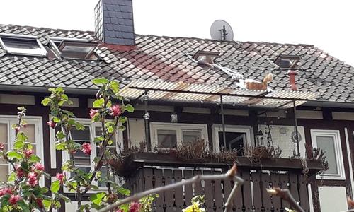 Der Kater ist von dem Dach nicht wieder zurück gekommen.