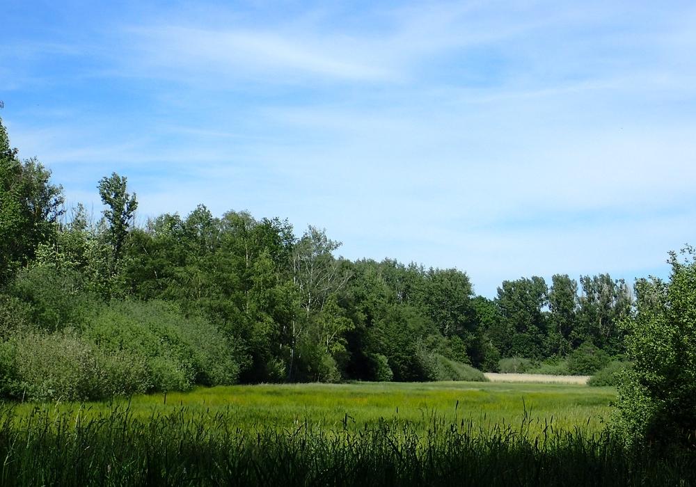 Das FFH-Gebiet Lutterlandbruch.