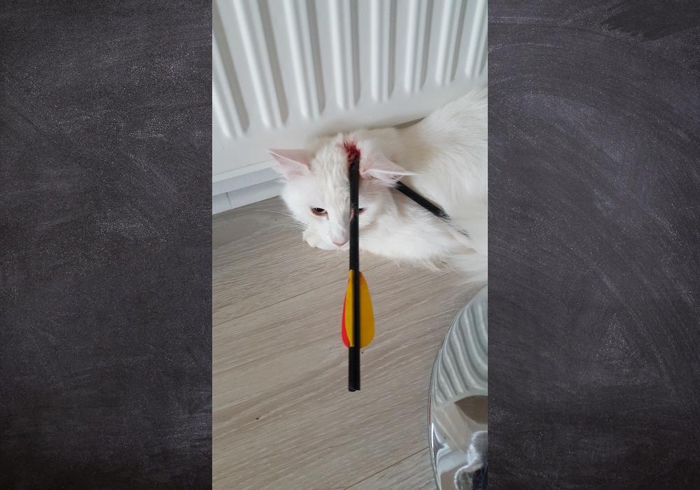 Katze Nuri wurde mit einem Pfeil in den Kopf geschossen.