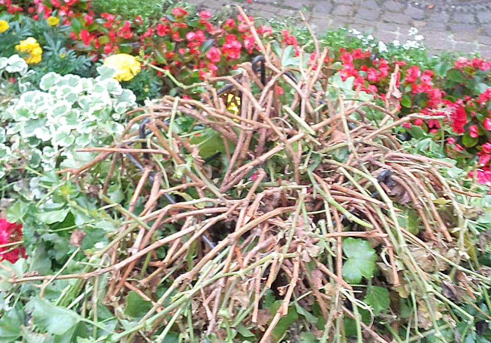 """Das Blumenbeet """"Am Alten Tore"""" wurde mehrmals zerstört."""