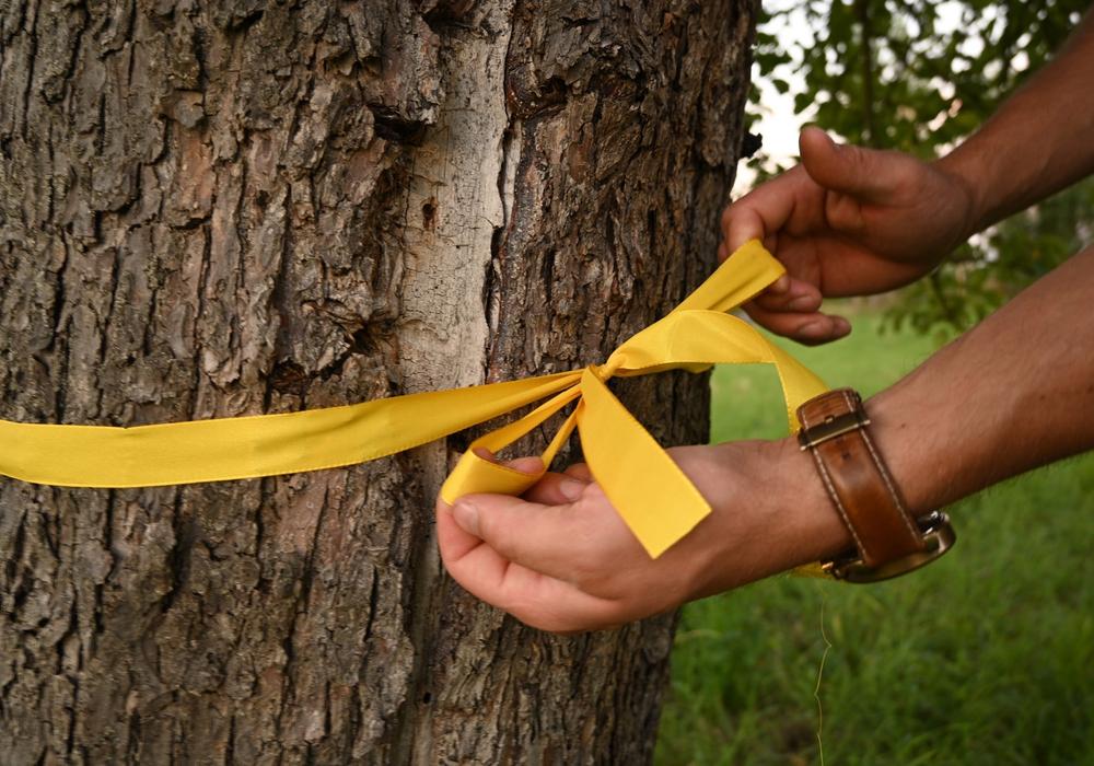 Bäume und Sträucher mit gelben Bändern – hier darf selbstgepflückt werden.