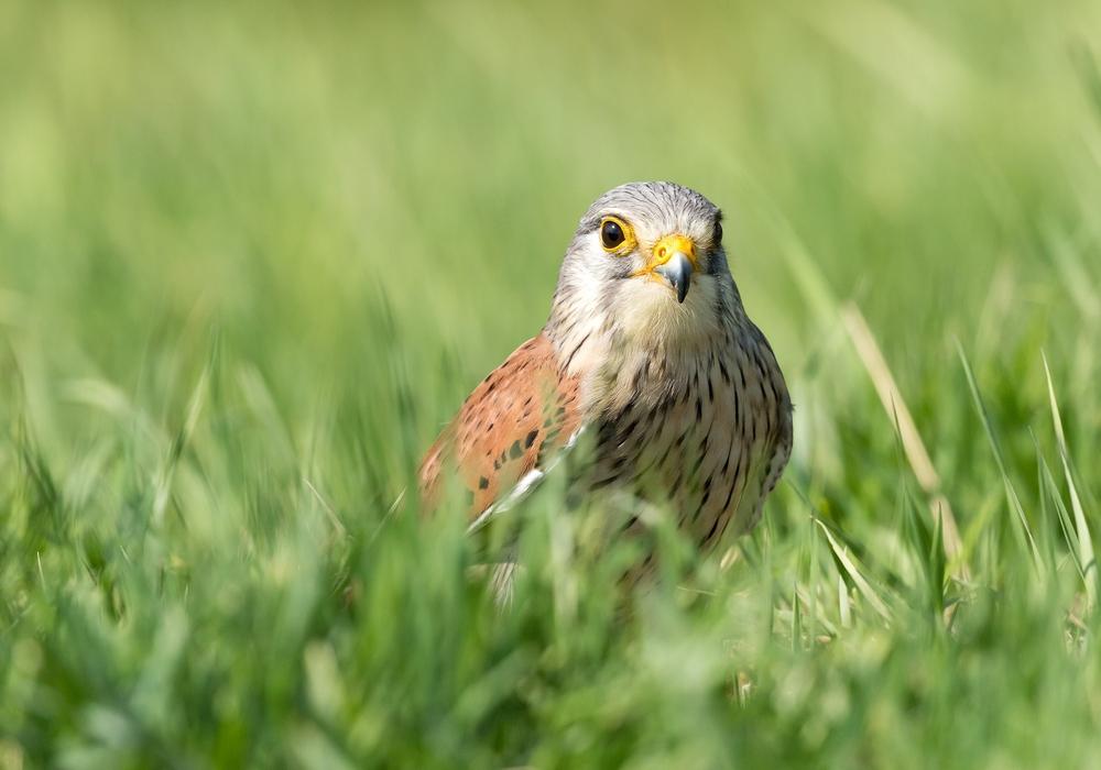 Im Hordorfer Artenschutzhaus sollen zukünftig geschützte Vögel ein Zuhause finden.