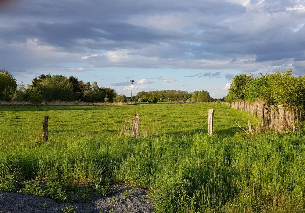 Am Fuhsekanal wurde aus der Ackerlandschaft strukturreiche Wiesenlandschaft. Jetzt brüten hier wieder Störche.