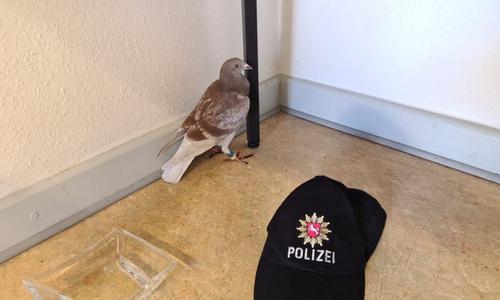 Die Taube wurden mit auf die Wache genommen.