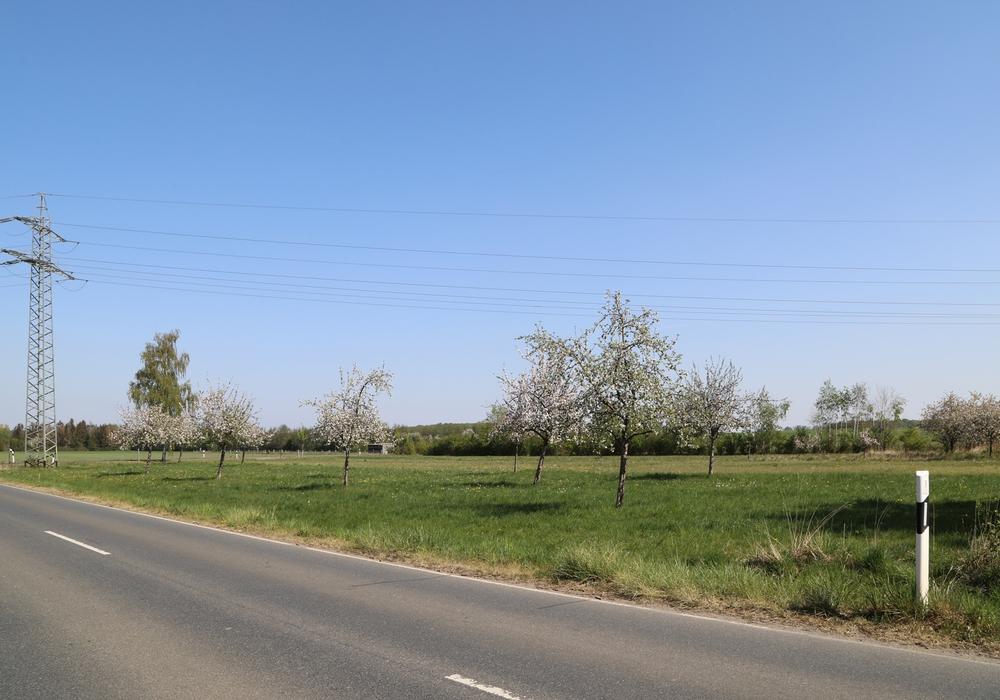"""Fläche der geplanten Sondergebiets-, Gewerbe-, Misch- und Wohnfläche """"Im Ackern"""" am Nordostrand von Schandelah."""